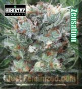 Ministry of Cannabis Zensation feminised best seeds online